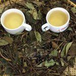 Chè vằng giảm cân có TỐT không? Phương uống trà vằng giảm béo đúng cách!