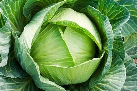 Những thực phẩm hỗ trợ giảm mỡ thừa hiệu quả1